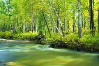 绸缎般的森林河流