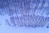 雪原雪域树林