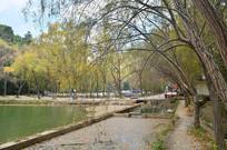 杨柳山水风景