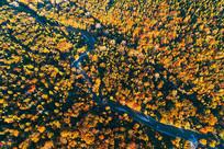 长白山茂密林海河湾秋色