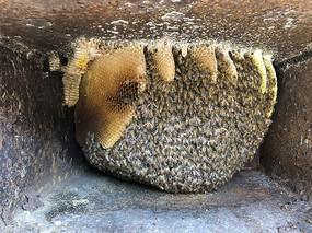 钢铁柜子里的中蜂蜂巢