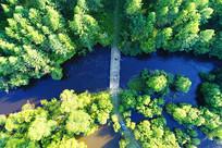 航拍绿色林海河流桥梁