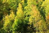 金秋彩林风景
