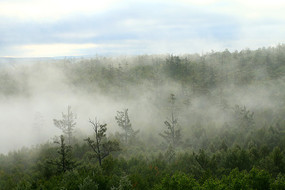 茫茫林海林雾升腾