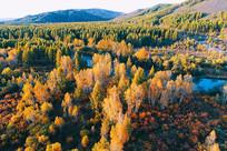 茂密树林河湾秋色