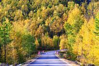 秋季山林公路风景