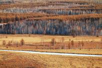 山野密林地貌景观