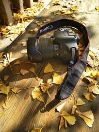 相机银杏叶