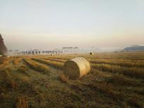 清晨薄雾稻田地
