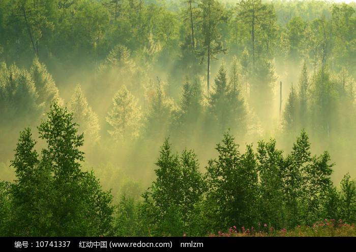 树林阳光雾气风景图片