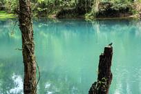 小鸟树干绿水