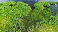 航拍沼泽湿地花草风景