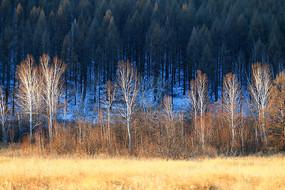 林海雪原草甸白桦林