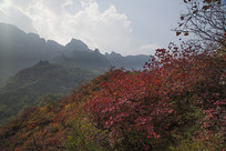 太行山秋天红叶