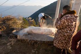 重庆巫山高山农户宰杀过年猪