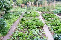 农家小菜园