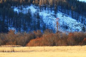大兴安岭冬季草甸密林雪景