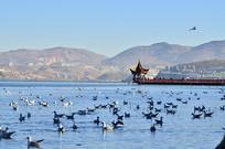 高山湖泊海鸥风景图片