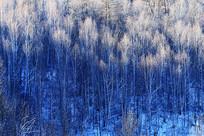 林海雪原密林雪景