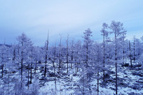 林海雪原松林风景