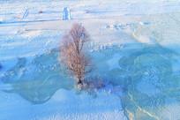 雪域冰封河流一棵树