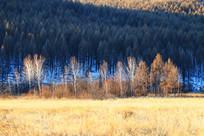 雪域密林雪景