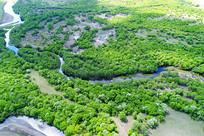 丛林河湾地貌风景