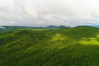 大兴安岭林海茂密森林