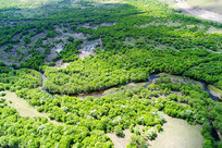航拍绿色丛林河湾