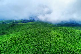 大兴安岭丰厚的森林资源风景