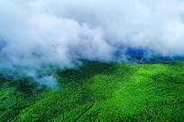 茂密林海云雾山路