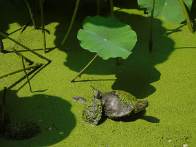 晒太阳的乌龟