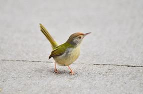 一枝小飞鸟