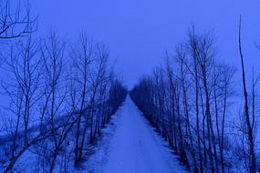 雪原道路树林雪夜