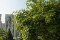 绿色生态家园的美化竹林
