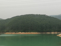 清远树林拍摄风景图