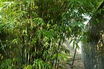 小区角落里种植的竹林