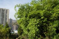 住宅小区里美丽的竹林
