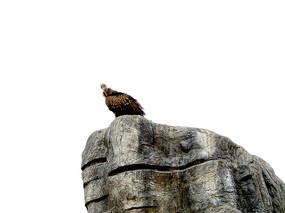 岩石上的一只秃鹫