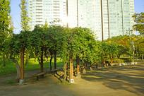韩国水原孝园公园的露天绿廊