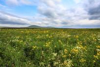 内蒙古草原野花