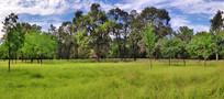 蓝天草地园林全景