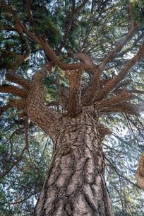 阳光下的树木