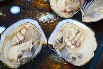 淡水珍珠蚌