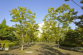 韩国水原孝园公园-健身道