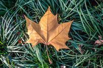 绿色草地上的金色树叶
