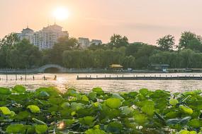 日落大明湖
