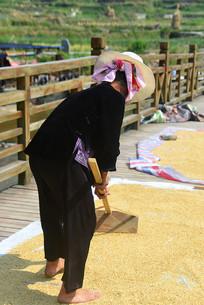 苗寨晒粮食的苗族妇女