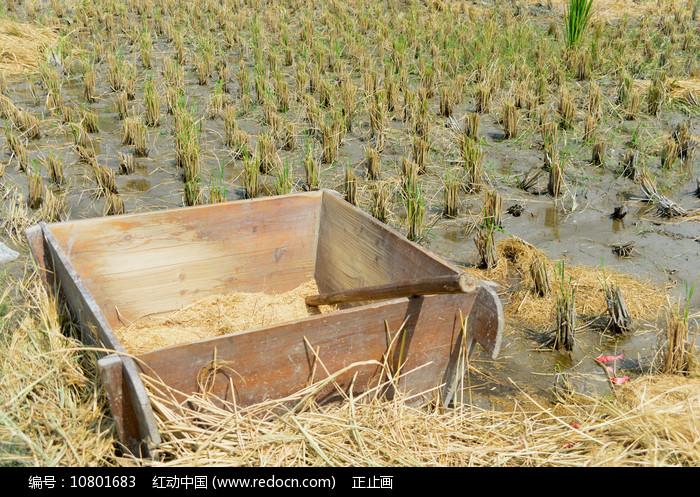 收割后的稻田及拌桶 图片