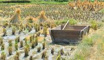 收割后的稻田及打谷箱